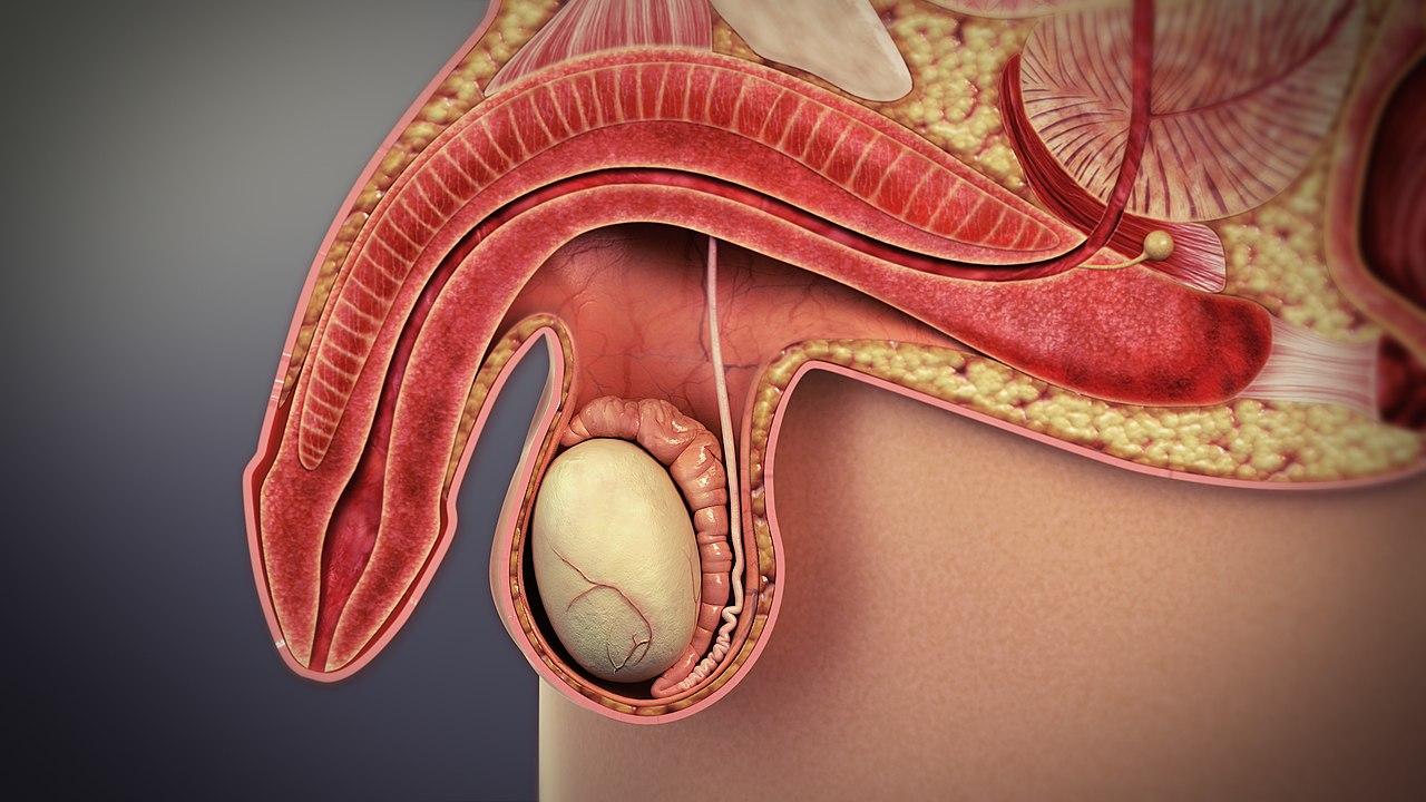 erecția cu ibuprofen
