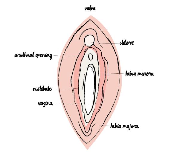 penis entors