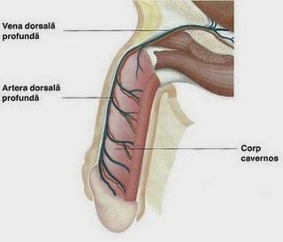 prevenirea erecției normale