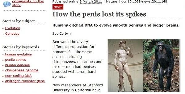 cu ce să comparăm penisul
