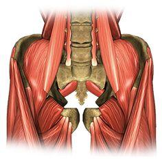 Dictionar Medical sac herniar