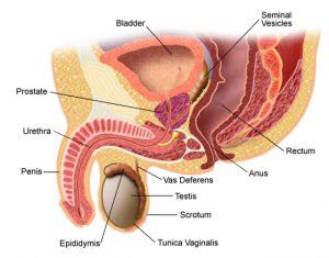 Slăbirea erecției cu prostatită