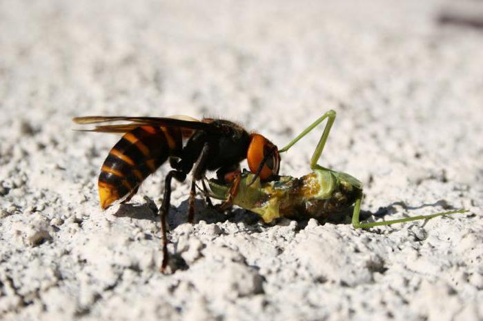 Care sunt zonele care fac ca intepatura de albina sa fie insuportabila? - iasiservicii.ro