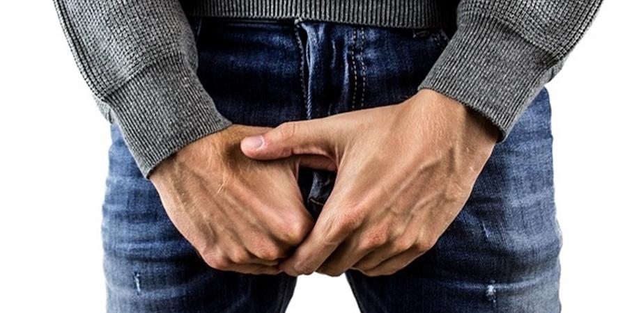 în timpul unei erecții, testiculele dispar)