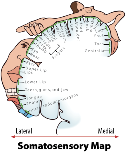 penisuri masculine la femei