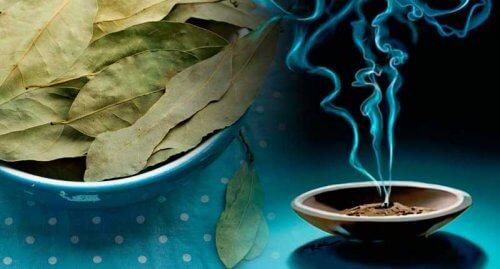 Beneficiile nebanuite ale frunzelor de dafin (laur)