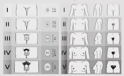 dimensiunea formei penisului masculin)