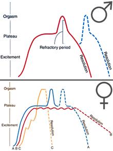 etapele excitării penisului