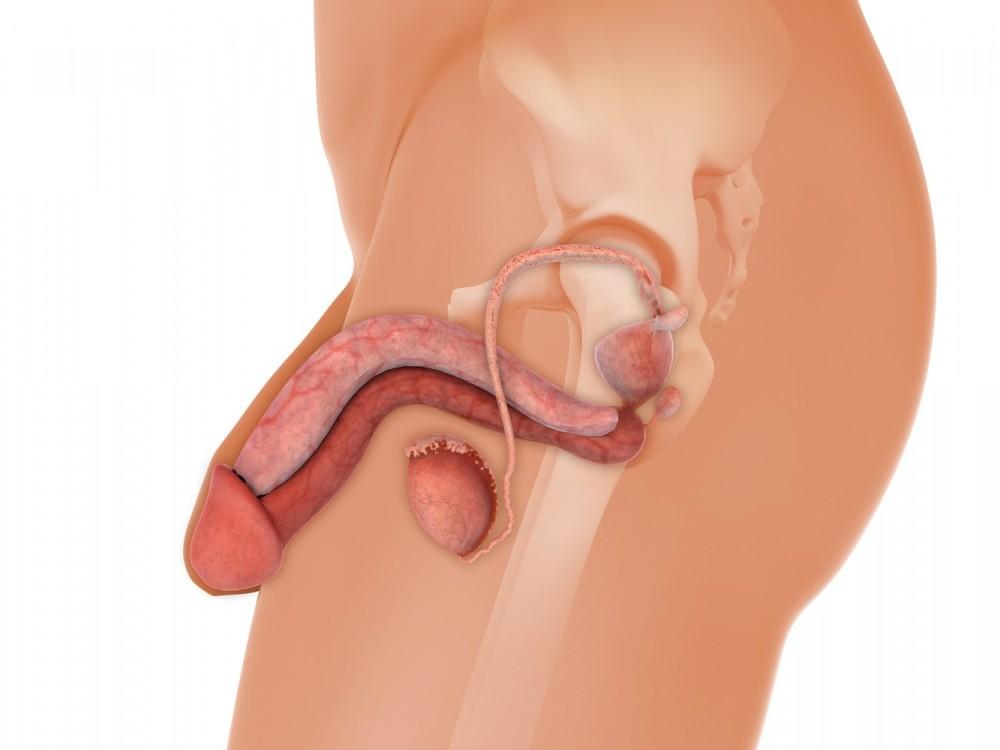 probleme de erectie de 24 de ani ce medicamente ajută la erecția slabă