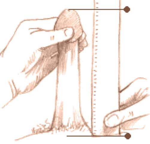 hormoni de mărire a penisului