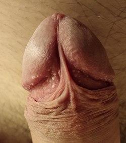 cum arată un penis masculin