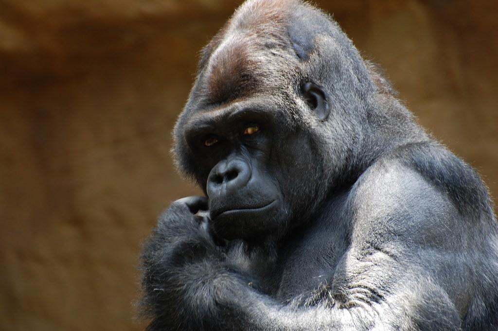 Cum au evoluat organele reproducătoare umane faţă de cele ale primatelor - iasiservicii.ro