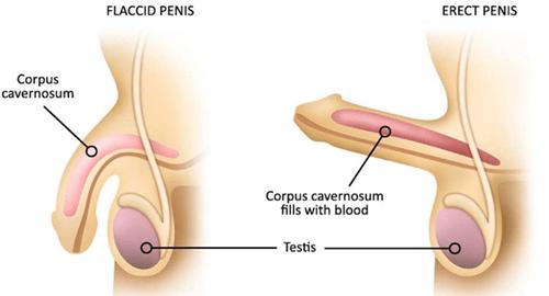 erecția lentă provoacă tratament