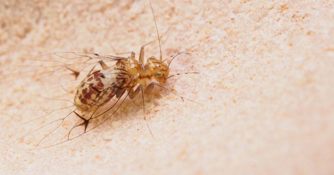 Penisul fosilizat al acestui păianjen e mai mare decât al iubitului tău