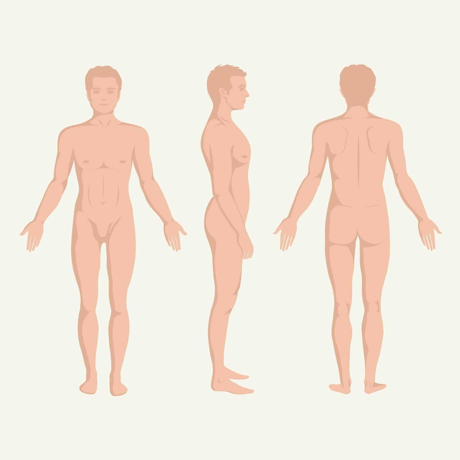 penisul mascul cât timp crește