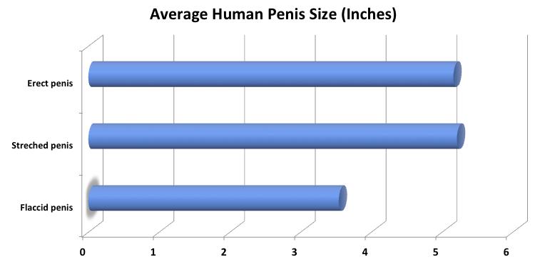 parametrii penisului