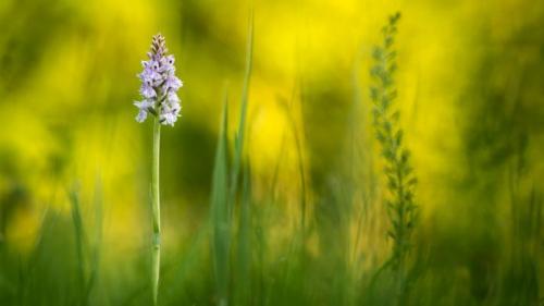 fără erecție în iarbă